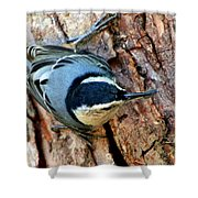 Nuthatch Heading Down Shower Curtain