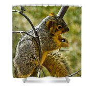 Nuts And Seeds Make A Great Lunch Shower Curtain