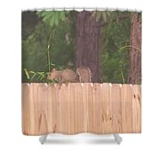 Nuts For A Squirrel Shower Curtain