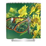 Nymphalid Butterfly Pteronymia Sp Shower Curtain