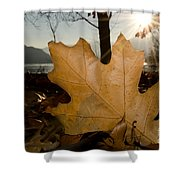 Oak Leaf In Backlight Shower Curtain