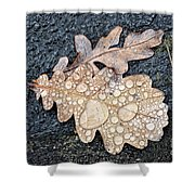 Oak Leaves Shower Curtain
