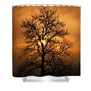 Oak Tree Sunburst Shower Curtain