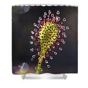 Oblong-leaved Sundew Drosera Intermedia Shower Curtain