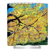 October Fall Foliage Shower Curtain