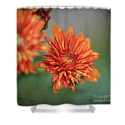 October Mums Shower Curtain