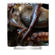 Octopus 1  Shower Curtain