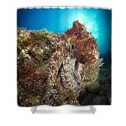 Octopus Posing On Reef, La Paz, Mexico Shower Curtain