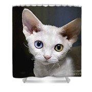 Odd-eyed Kitten Shower Curtain