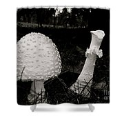 Off With Your Head Shower Curtain by Trish Hale