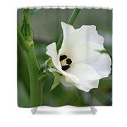 Okra Flower Shower Curtain