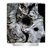 Old Ancient Olive Tree Spain Shower Curtain