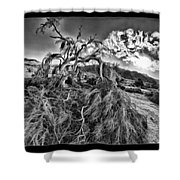 Old Desert Tree Shower Curtain