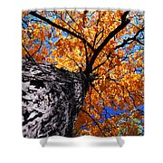Old Elm Tree In The Fall Shower Curtain