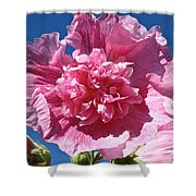 Old Fashioned Hollyhock Shower Curtain