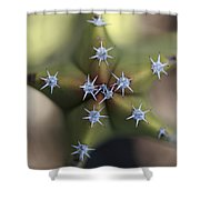 Old Man Cactus Lophocereus Schottii Shower Curtain