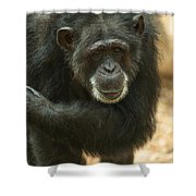 Old Timer Shower Curtain