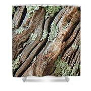 Old Wood And Lichen Shower Curtain