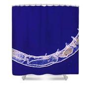 Oligochaete Worm Shower Curtain