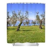 olive grove on Lake Gardan Shower Curtain