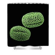 Olive Olea Europaea Sem Close-up View Shower Curtain