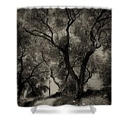 Olive Trees 9 Shower Curtain