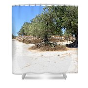 Olive Trees In Samaria Shower Curtain