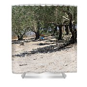 Olive Trees In Sebastia Nablus Shower Curtain