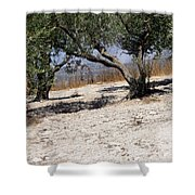 Olive Trees Standing Alone Shower Curtain