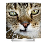 Oliver The Cat Shower Curtain