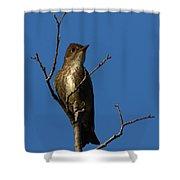 Olivesided Flycatcher Shower Curtain