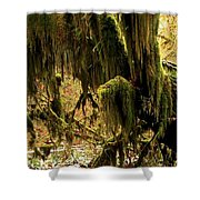 Olympic Moss Shower Curtain