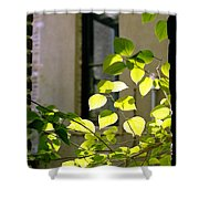 Omaha Old Market Passageway Shower Curtain