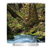 On The Banks Of Big Spring In The Missouri Ozarks Shower Curtain