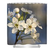 One Fine Morning In Bradford Pear Blossoms Shower Curtain