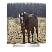 One Funny Horse Shower Curtain