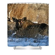 One Horn Shower Curtain