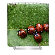One Lady Bug Voted Off The Island Shower Curtain