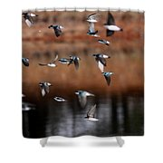 One Last Swallow Shower Curtain