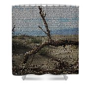 One Majastic Trunk And One Hot Desert Shower Curtain