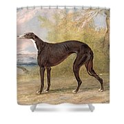 One Of George Lane Fox's Winning  Shower Curtain