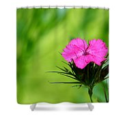 One Of The Phlox Shower Curtain
