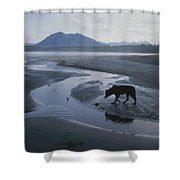 One Of Vargas Islands Habituated Wolves Shower Curtain