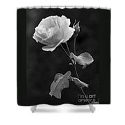 One Rose In Black And White Shower Curtain