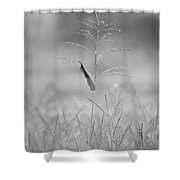 One Tall Blade Of Grass On A Foggy Morn - Bw Shower Curtain