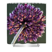 Onion Flower Shower Curtain