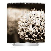 Onion Flowers Shower Curtain