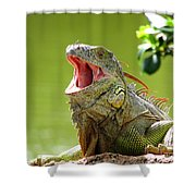 Open Mouth Iguana Shower Curtain