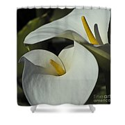 Open White Calla Lily Shower Curtain