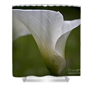 Open White Calla Lily II Shower Curtain